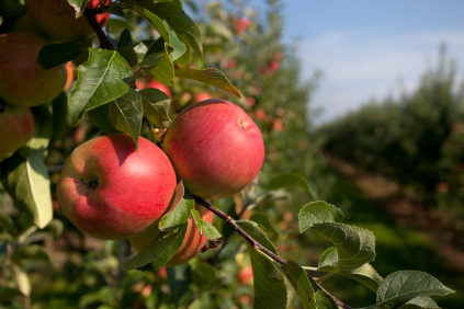 Apple Orchard Insurance - IL-IN-IA-KS-KY-MI-MN-MO-OH-WI