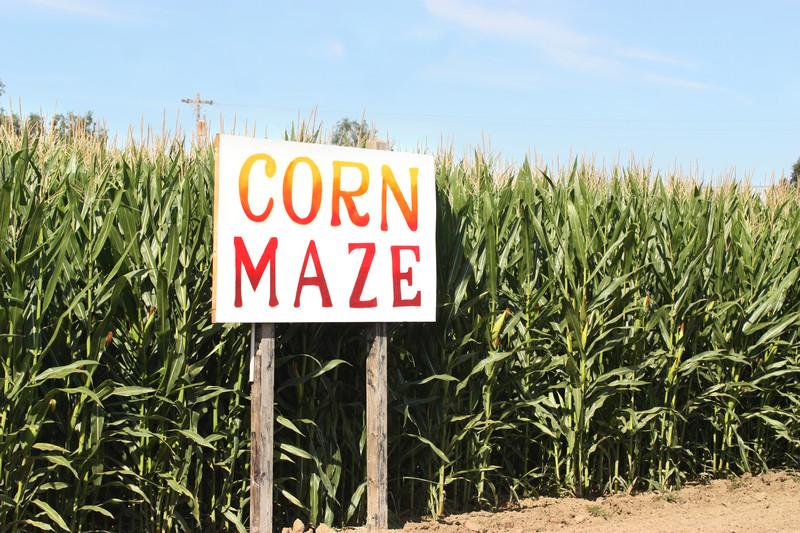 Corn Maze Insurance - IL-IN-IA-KS-KY-MI-MN-MO-OH-WI