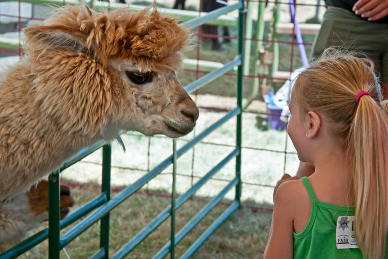 Petting Zoo Insurance - Insurance - IL-IN-IA-KS-KY-MI-MN-MO-OH-WI