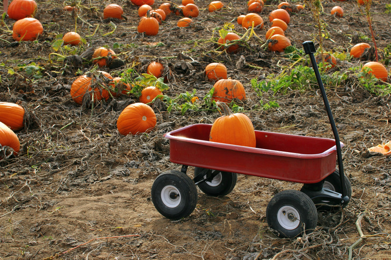 Pumpkin Farm Insurance - Illinois